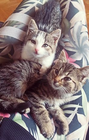 Piękne małe kotki