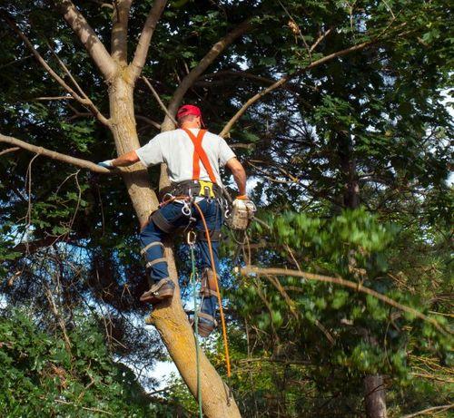 Расчистка территорий Благоустройство Спил деревьев