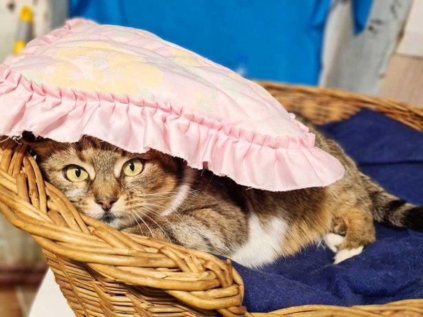 Молоденька кішечка Булочка в пошуках родини. Вік - 1,5 року