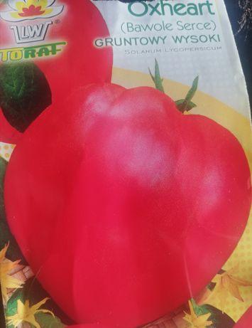 Sadzonki pomidora bawole serce
