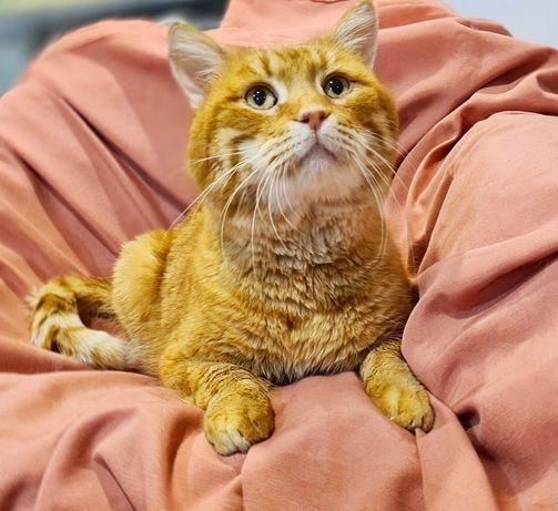 Рыжий котик Персик. 1,5 лет. Кот. Коты.