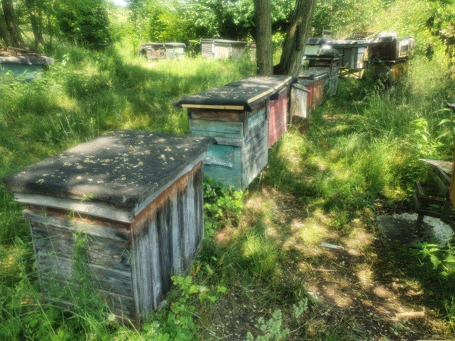 Ule z pszczołami. Psary - image 1