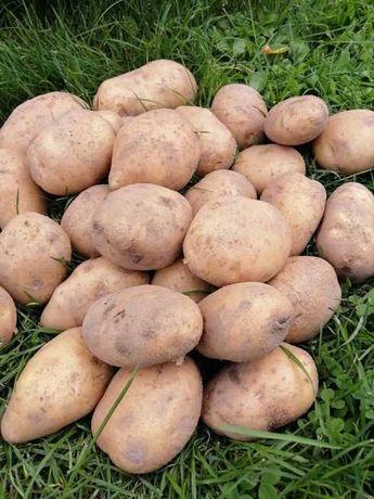 Ziemniaki jadalne bardzo smaczne od rolnika ekologiczne