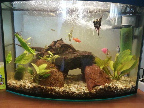 Akwarium plus zycie