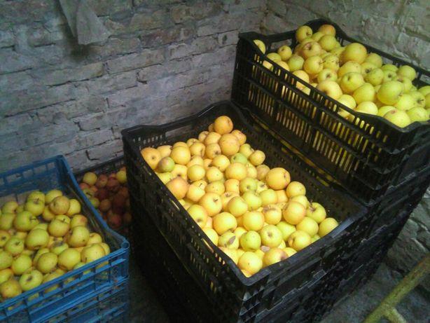 Яблука домашні з власного саду .