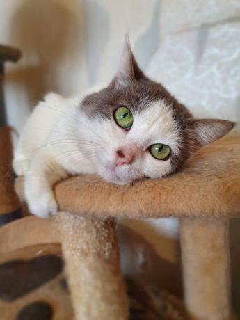 Белочка, 2 года, стерильна. Кот, кошечка, котенок, котята