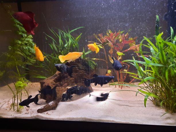 Akwarium Juwel Primo 60l LED z pokrywą + zawartość