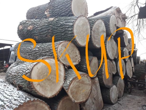 Drewno topola skup wycinka topole olcha sosna olszyna