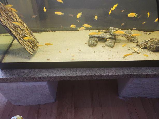 Akwarium 150litrow  z rybkami pyszczaki calico i soulosa