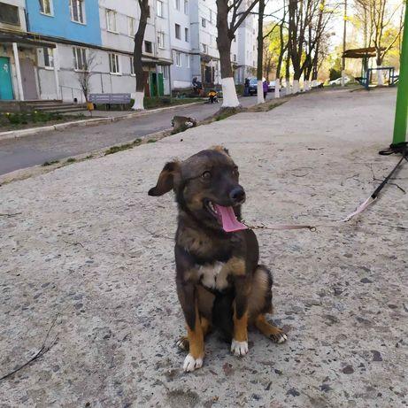 9 кг счастья! Маленькая собачка для квартиры и дома. Щенок Харьков.