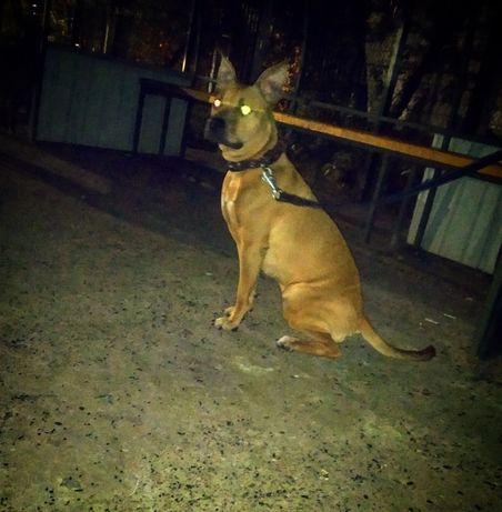 Вугуляю собаку 30-50 грн