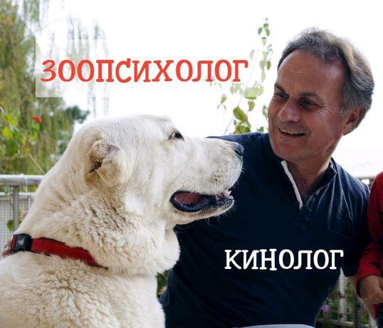Дрессировка собак,коррекция поведения, кинолог,зоопсихолог, Онлайн