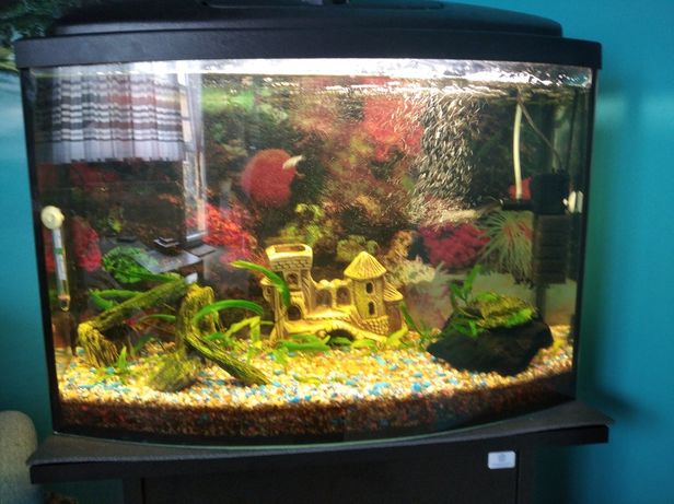 Akwarium 72 L pełne wyposażenie