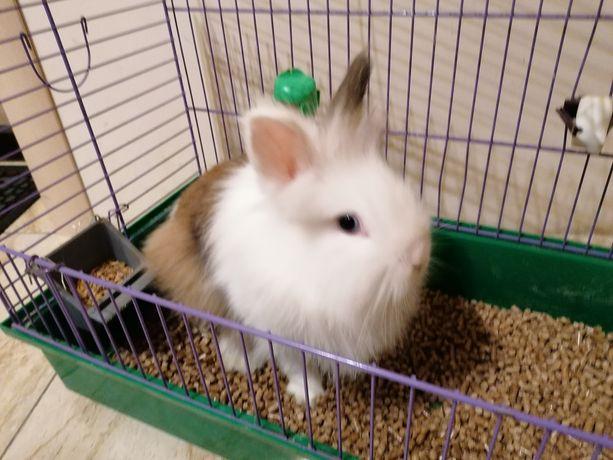 Продам декоративный кролик декоративний