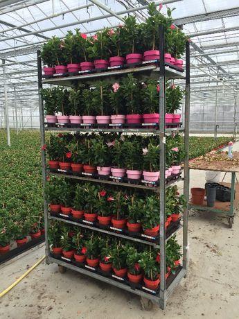 Carrinhos CC para plantas ou Flores