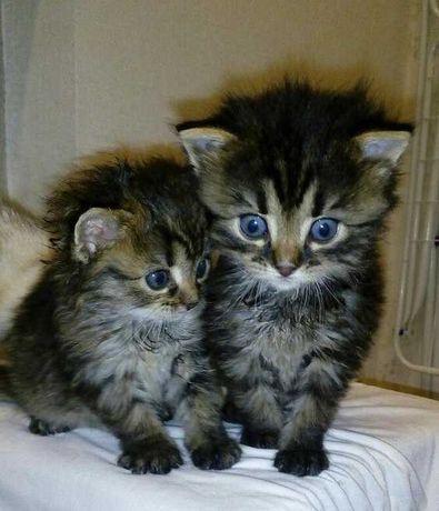 Самые красивые котята у нас!