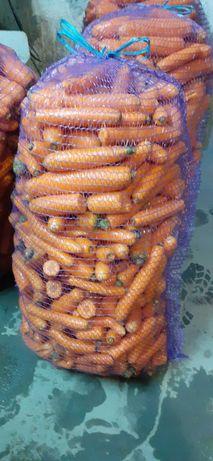 Marchewka  marchew  odpadowa dla zwierząt
