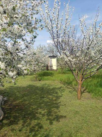 Дача в экологически чистом  селе