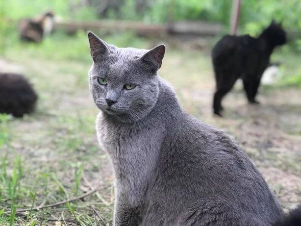 Ласковый кот муркот 5 лет. Котик, кіт.