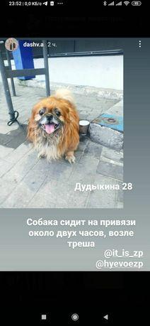 Пропала замечена собака Ул. Дудыкина