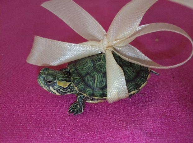 Шикарный комплект : черепаха маленькая с террариумом и кормом.Доставка