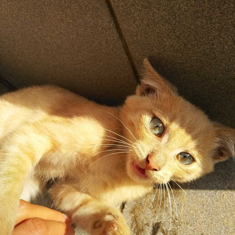 Бесплатно котёнок в надёжные руки