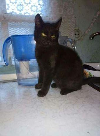 Отдам черную кошку,1 год,стерилизована,привита