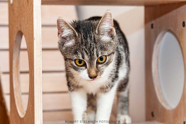 Kokos biało-bura kotka i Koks czarny kotek - 5 miesięczne