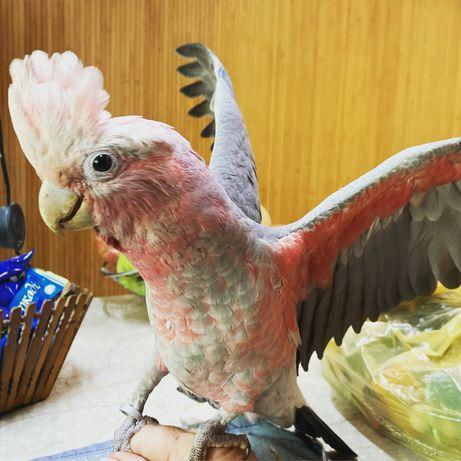 Попугаи Калита -монах ,какаду,ара ,жако