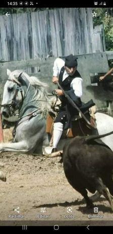 Vendo ou troco cavalo lusitano com livro azul