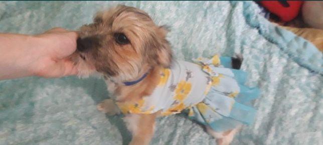 Одяг для собачки, плаття.