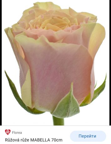 Продаю саженцы роз,и фруктовых деревьев.