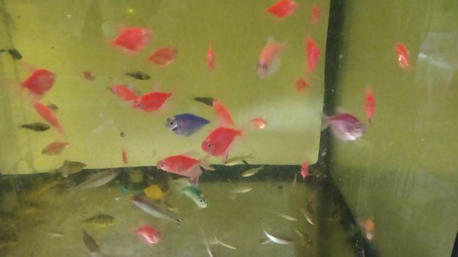 Аквариумные рыбки оптом для зоомагазинов и оптовых покупателей