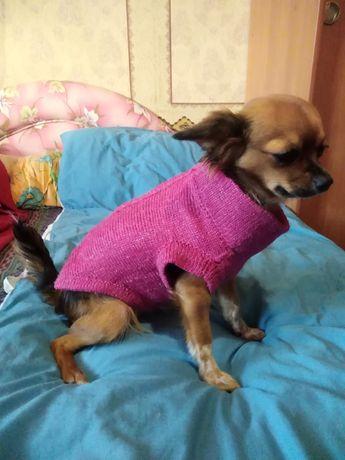 Одежда для животных (можно под заказ)