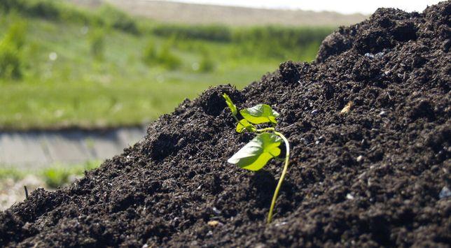 """Czerna ziemia kompost ogrodniczy """"Próchniaczek"""""""