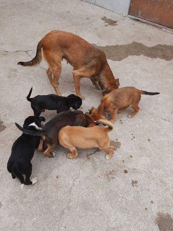 Cachorrinhos para Adoção responsável
