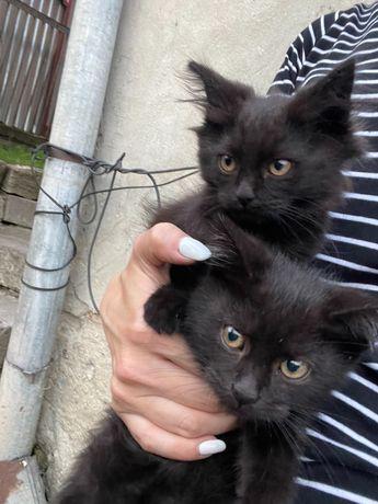 Кошенята хлопчик та дівчинка