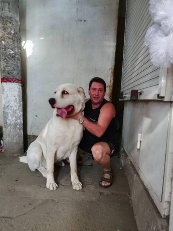 Инструктор по вязкам собак. Вызов на дом 400гр-500гр и работа 1-60мин.