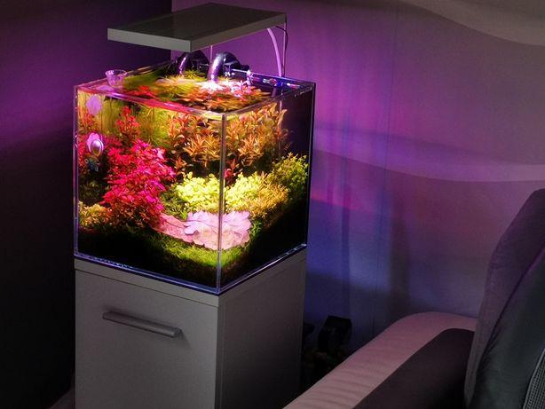 Akwarium roślinne kostka