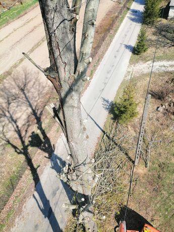Wycinka drzew, podcinka gałęzi oraz karczowanie działek