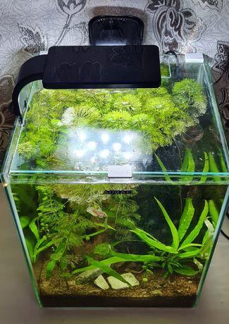 Sprzedam akwarium aquael 30litrowe
