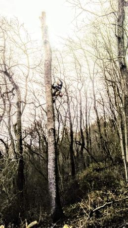 Вирізання дерев робота альпиністична