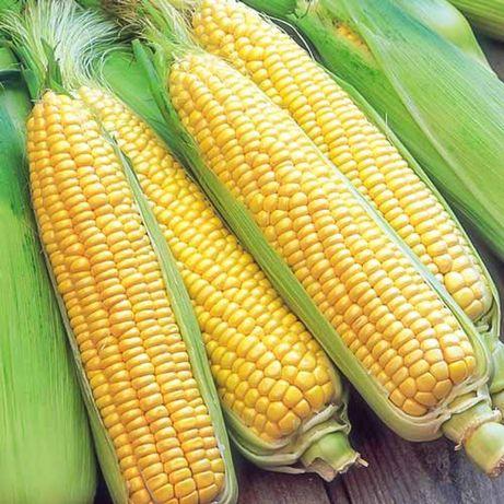Продам семена сахарной кукурузы