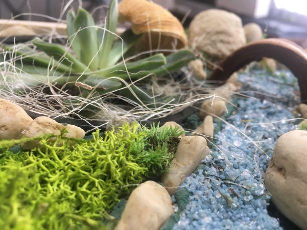 Miniaturowy ogród w skrzynce jak las w słoiku na prezent
