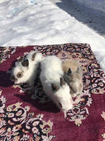 Продаються декоративні кролики
