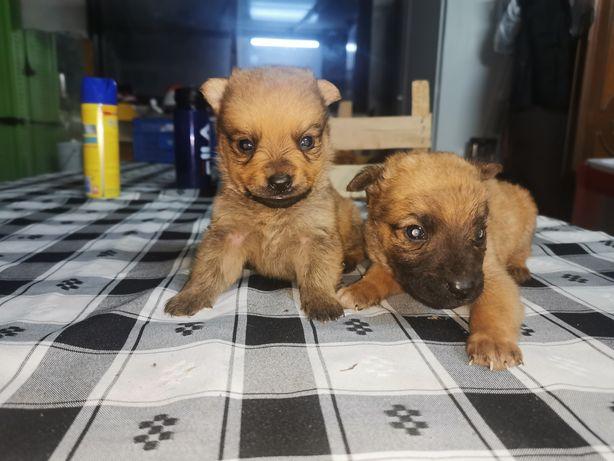 Cães para adopção responsável