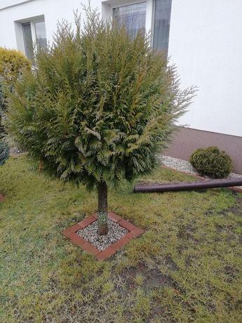 Drzewo, drzewko, krzewy