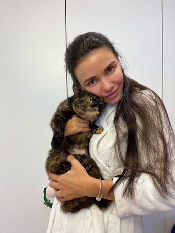 Ласковая кошка Марта 3 года, кошечка, кішка, киця