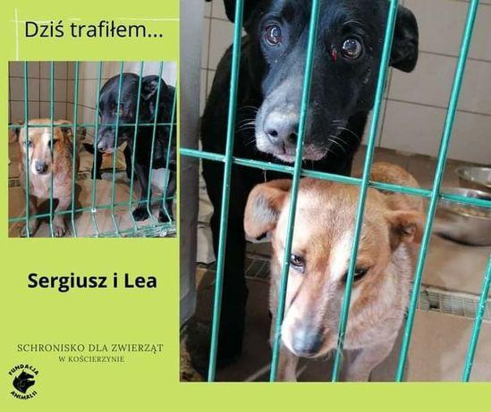 Pieski,psy znalezione