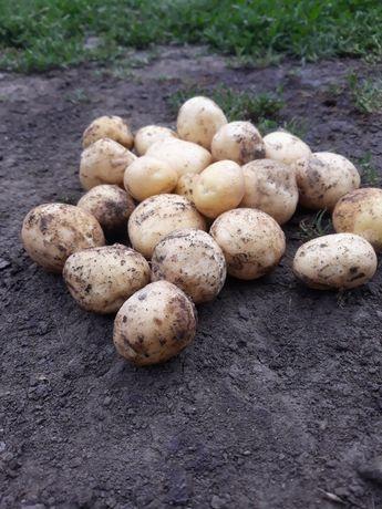 Продам молоду картошку
